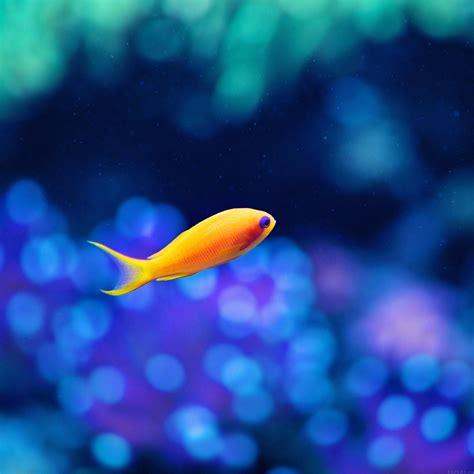mj cute fish ocean sea animal nature papersco