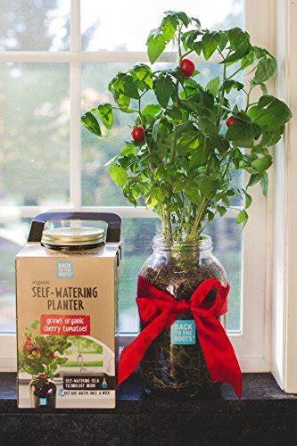 roots  watering planter tomato buy