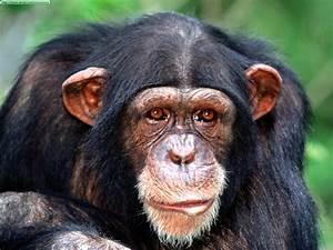 chimpToday's Evil Beet Gossip – Today's Celebrity Gossip ...
