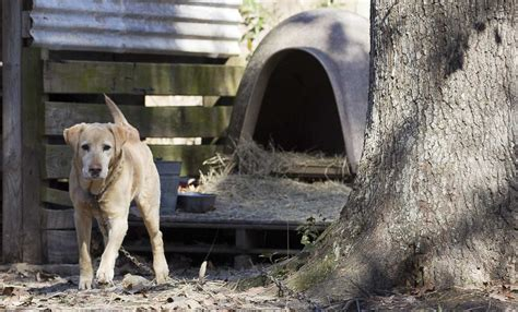 montgomery county animal control defends  caney couple