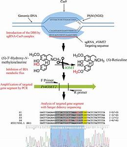 After Induction Of Mutagenesis In The Ps4 U2032omt Gene Region By
