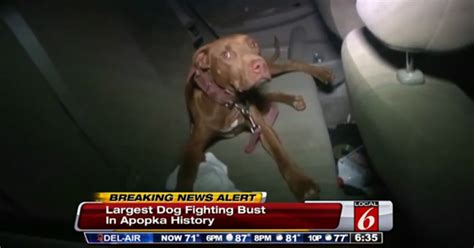 dogs rescued  people arrested  florida dogfighting