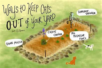 Cats Keep Yard Cat Garden Away Deter