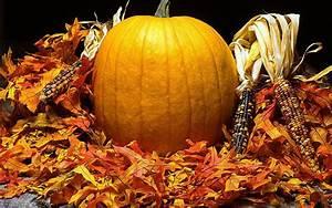 Pumpkin, Screensavers, And, Wallpaper