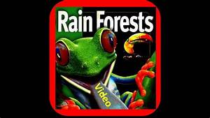 Rainforest Lesson For Kids