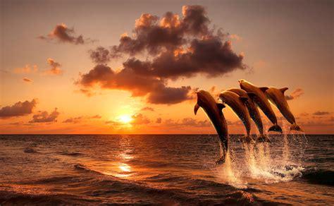captive born dolphin escaped captivity  joined  wild pod