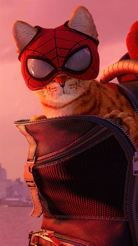 spider cat spider man miles morales  game  ultra hd