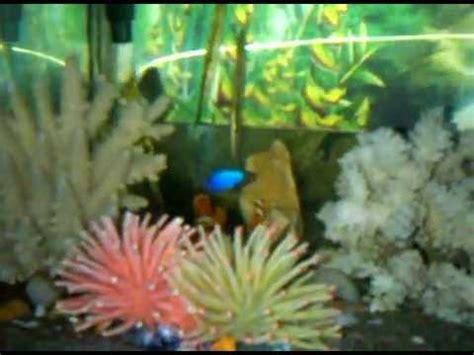 aquarium ikan hias air lautgp youtube