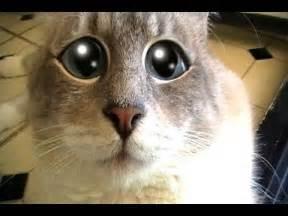 Talking Kitty Cat Scary World
