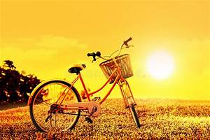 Colorful Bicycle On Flower Field On Sunset Background