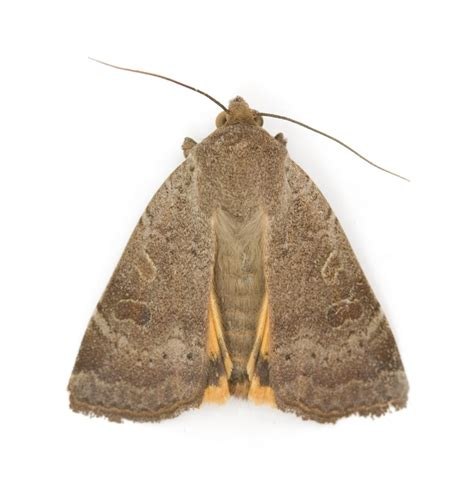 moth treatment removal  repair service carpet