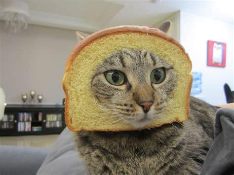 Bread Cat Meme - gayle tales in bread meme