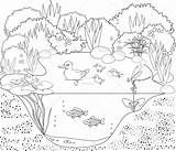 Pond Coloring Printable Duck sketch template
