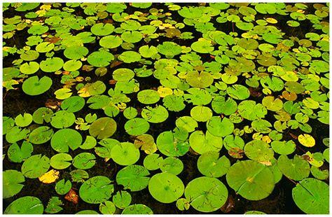 canadian nature photographer patterns textures