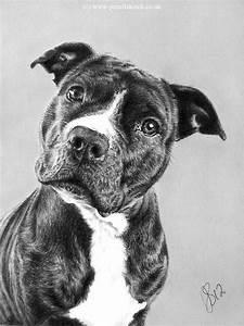 http://www.pencilsketch.co.uk/images/pencil_pet_portrait_2 ...