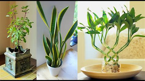 Add Plants To Your Home = Longer Life + More Energy For…
