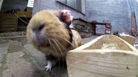 Kaninchen Decken+kleines Gartenupdate Inkl Hertas