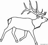 Elk Coloring Coloringall sketch template