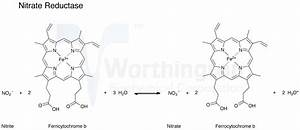 Enzyme Manual  Nitrate Reductase
