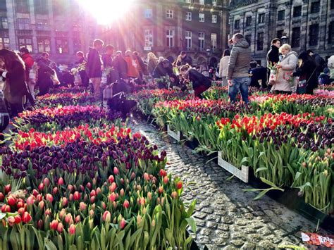 National Tulip Day 2019 In The Netherlands