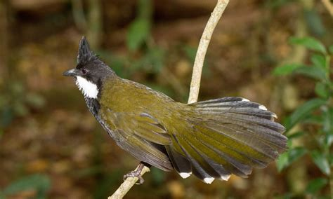 Australia's birds have evolved with the continent's ...