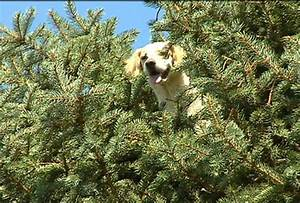 Dogs Celebrating Arbor Day THEIR Way