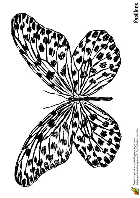 coloriage papillon tachete sur hugolescargotcom
