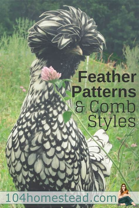 feather patterns comb styles  chickens