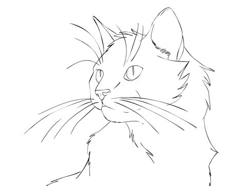 cat lineart clipartsco