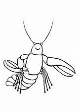 Kreeft Lobster Coloring Aragosta Colorare Krebs Kleurplaat Disegno Malvorlage Homard Colorear Langosta Dibujo Colorat Coloriage Pintar Planse Homar Cu Imagini sketch template