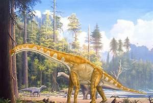 Paleontologists Explain Evolution Of Sauropod Dinosaurs