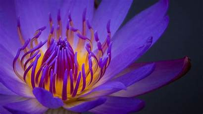 1080 Laptop Px 1920 Wallpapers Resolution Purple