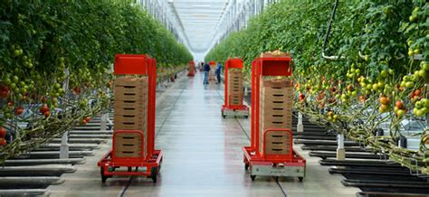 Greenhouse helps retailer sell local tomatoes year round ...