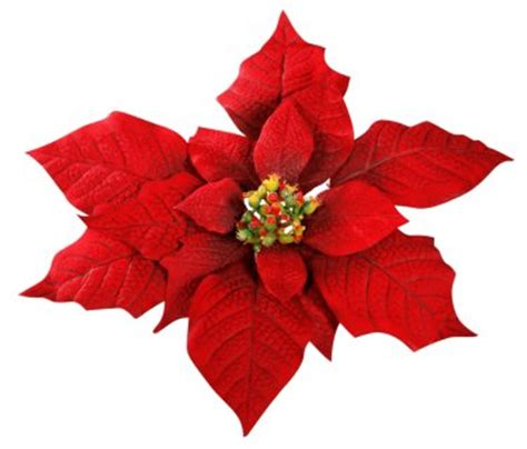poinsettia flower images winter flowers seriously flowers flowers gardening