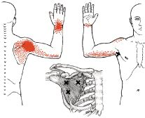 Shoulder Muscle Dysfunction And The Golf Swing Important