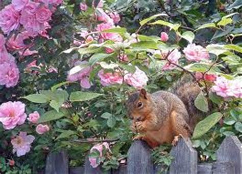 keeping squirrels away from bulbs how to keep squirrels away from your garden be a master gardener