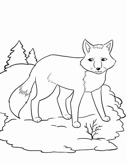 Fox Coloring Pages Printable Artic Animal