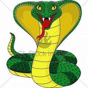 Angry Cobra Snake · GL Stock Images