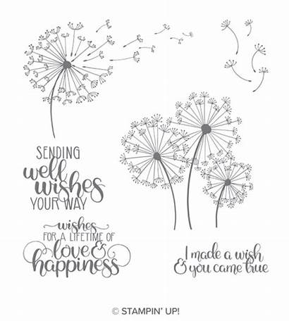Stamp Well Dandelion Wishes Juststampin