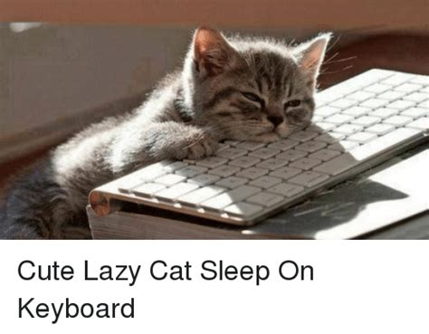 Lazy Cat Meme Lazy Cat Sleep On Keyboard Cats Meme On Sizzle