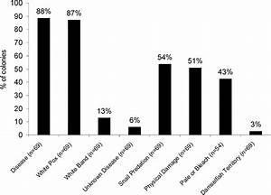 12  Percent Of Acropora Palmata Colonies At Haulover Bay