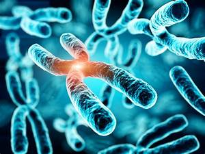 What Is A Gene Mutation And How Do They Happen