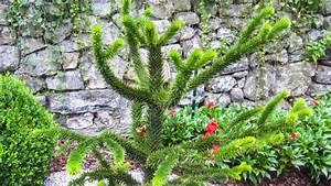 Berg Des Garten : der wasserfall der cascata varone bei riva del garda auf den ~ Indierocktalk.com Haus und Dekorationen