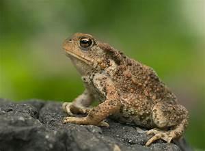 Was Fressen Molche Im Gartenteich : amphibien im gartenteich halten zooroyal ratgeber ~ Orissabook.com Haus und Dekorationen