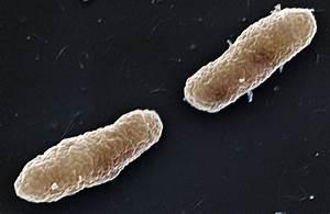 Blogorrhea  Whooping Cough Genomics