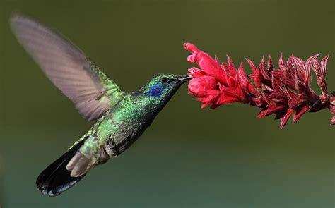 krāšņie putni - Spoki - bildes 2