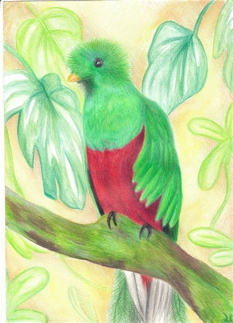 quetzal bird birds animals art