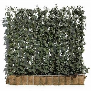 Efeu Pflanzen Kaufen : hecke am laufenden meter efeu 100 x 120 cm online kaufen bei g rtner p tschke ~ Buech-reservation.com Haus und Dekorationen