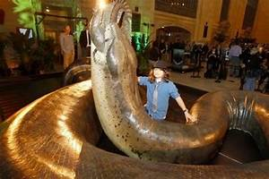This is a 1:1 model of the prehistoric snake titanoboa : pics
