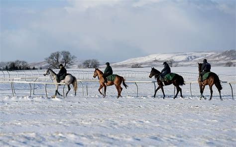In pictures: animals in the snow | Winter horse, Horse ...